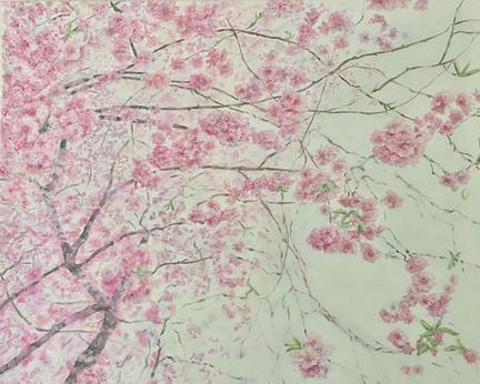 Et væld af kirsebærblomste