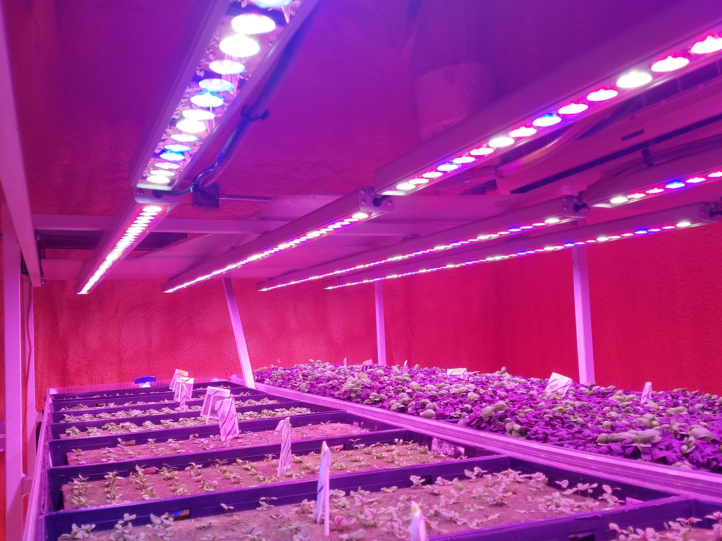 Seedling room lights and plants