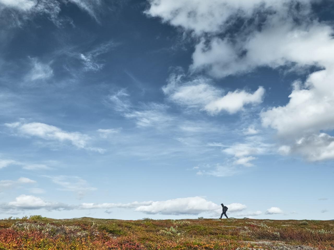 Vaeltaja | Hiker