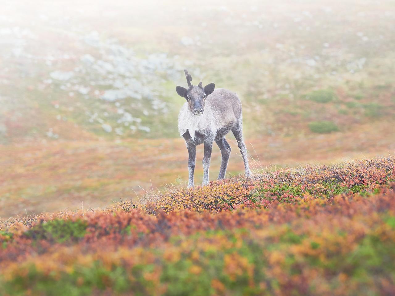 Yksisarvinen | Unicorn