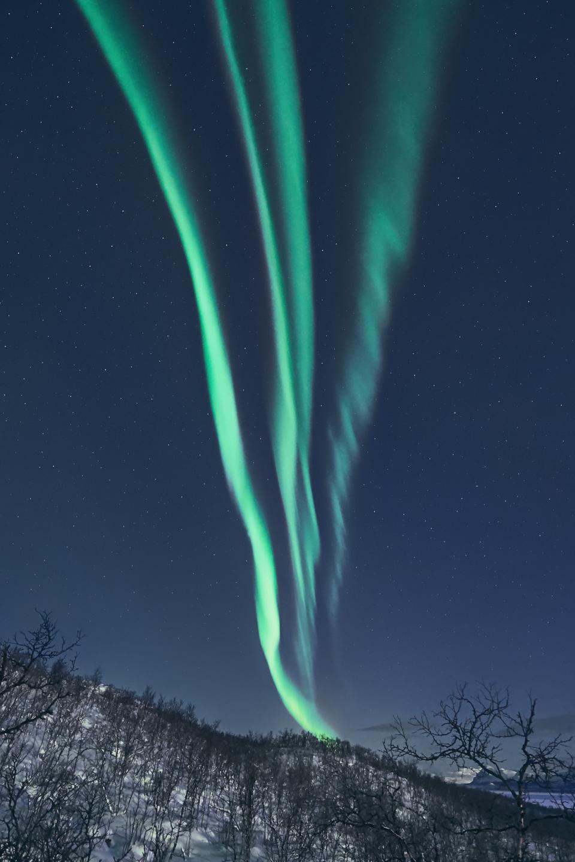 Aurora | Aurora