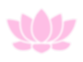 Light Pink Lotus Flower