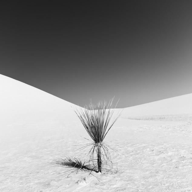 White Sands Life