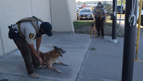 MCSO introduces two new K-9 officers