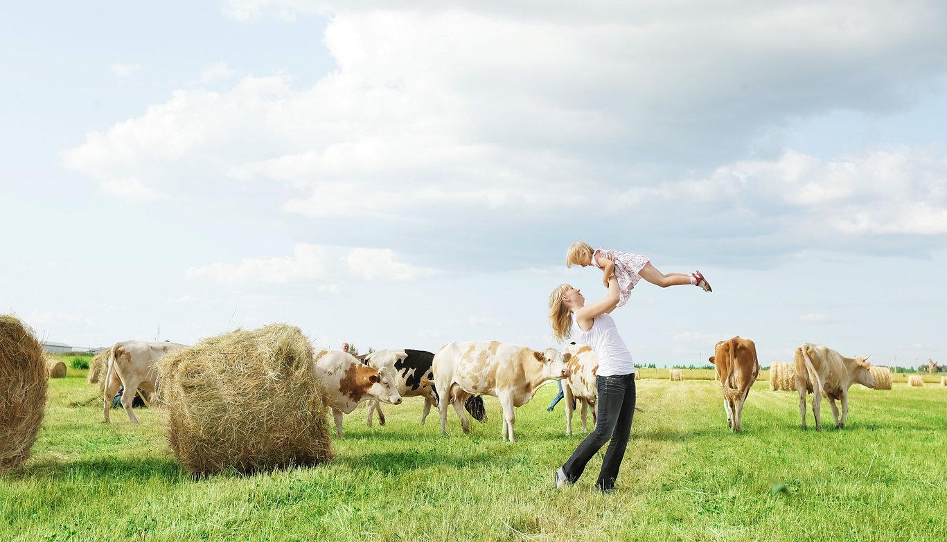 Молоко Свои продукты, ферма, производитель, Молмаркет