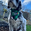 Thumbnail: St Patricks Day Bandana