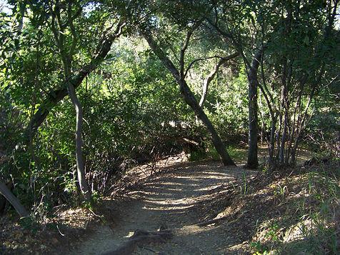 topangaforest.jpg