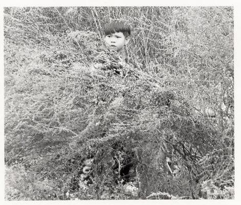 boyinbush.jpg