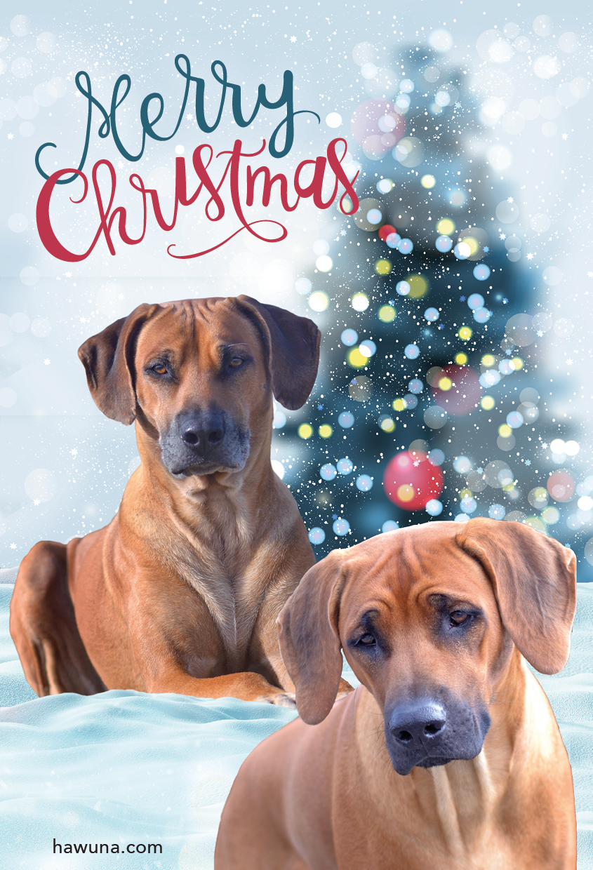 Kennel Hawuna wish you all a Merry Christmas