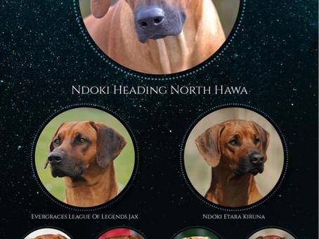 Ndoki Heading North Hawa