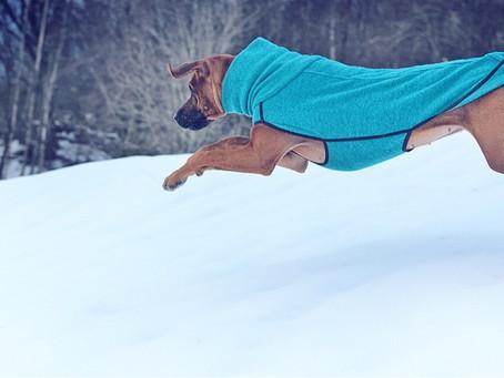 Lek og moro i snøen ❄️☃️