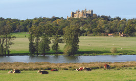 Belvoir-Castle-Herefords-near-lake-c.-Be
