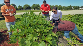 United Tobacco Company Fights Hunger with Organic Growing Project