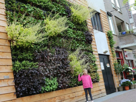 Museum of London – Phyto-Sensor: an air quality garden workshop and walk