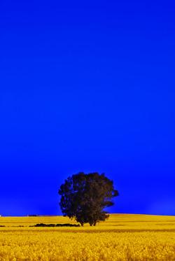 paulzabphoto_Outback NSW_Sept 2020_Parke