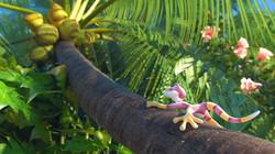 Paco Bongo Rainforest