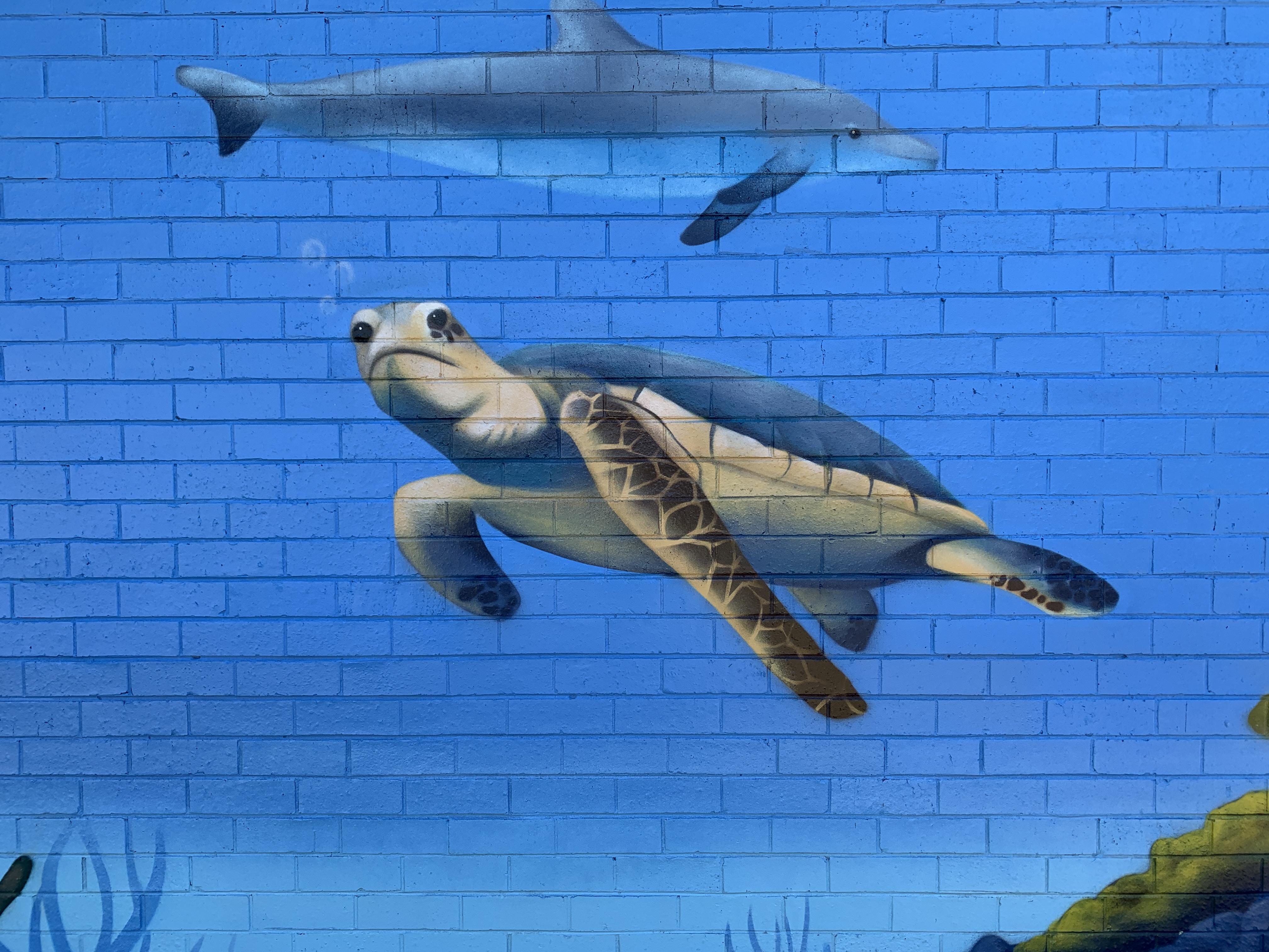 Turtle mural art by Urban Art