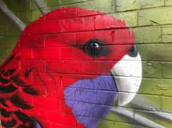 Wildlife aussie bird mural