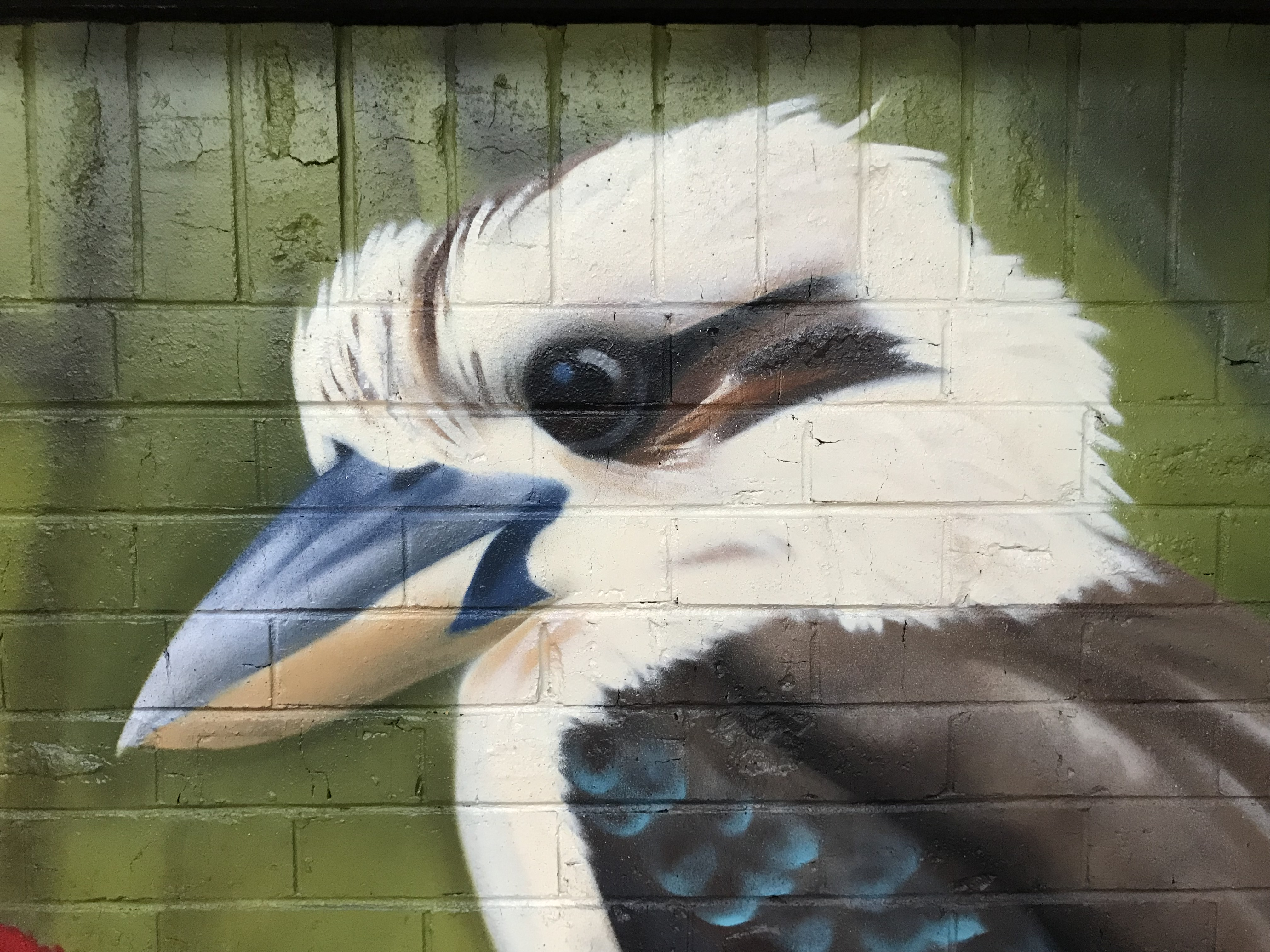kookaburra bird mural