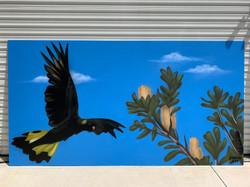 Black Cockatoo graffiti art Mural