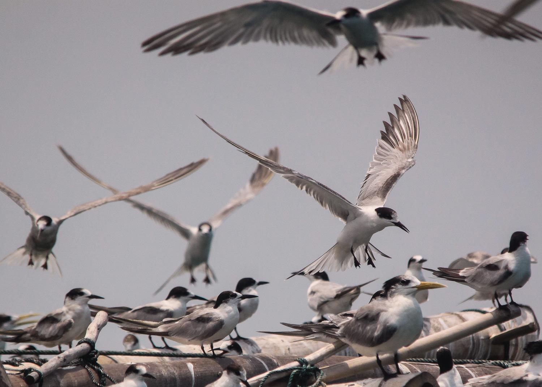 Crowd flock