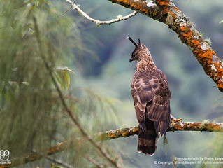 Malang Bird-Photography Trip