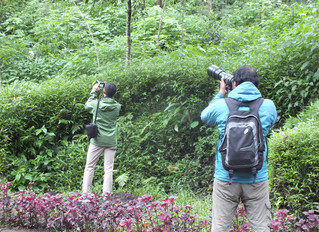 Halfday Birding in Tahura Raden Soeryo, East Java. February 2018