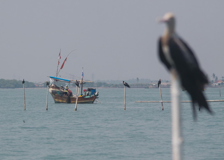 Fishermen and Frigatebirds