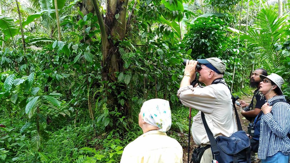 Scanning birds in agroforest habitat of Mt. Argopuro, Probolinggo