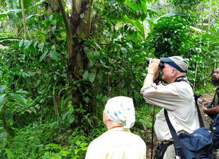2 Days Birding Trips in Probolinggo & Surabaya, East Java