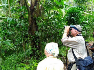 2 Days Birding Trips in Probolinggo & Surabaya, East Java