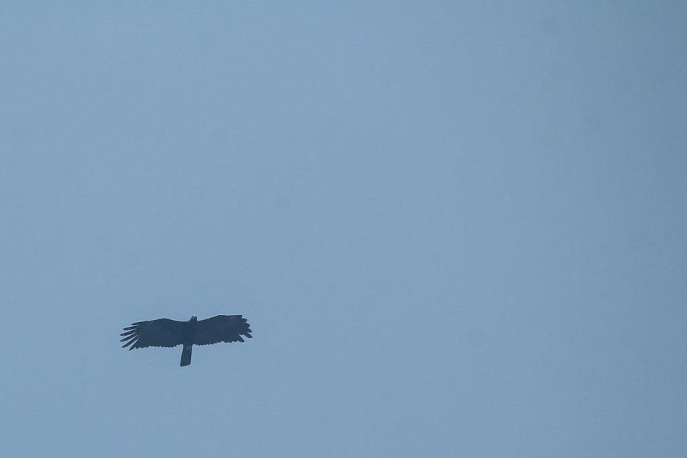 A flight Black Eagle