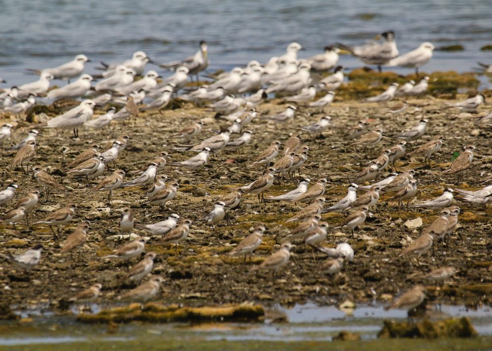 Shorebirds and seabirds