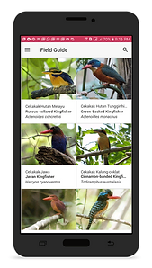birds of indonesia field guide