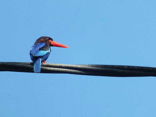 Fullday Birding in Malang, East Java