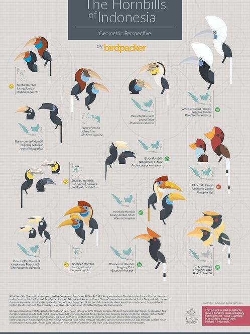 Hornbills of Indonesia