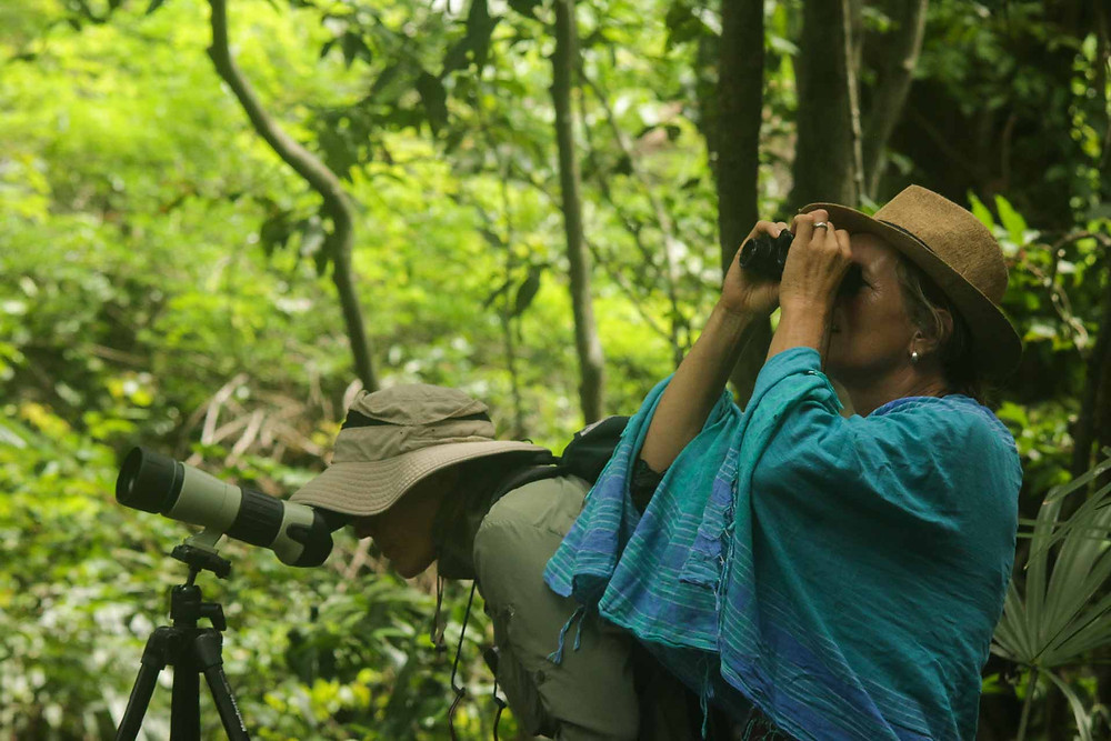 Our clients watch the birds in Baluran NP