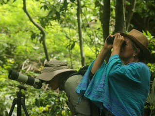 One-day Birding Trips in Baluran National Park