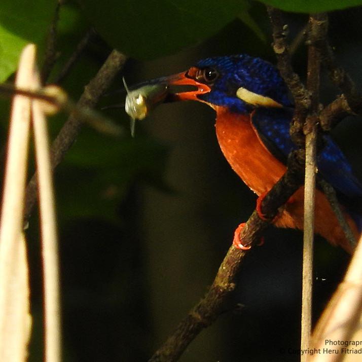 na 8/varas Kingfisher Mart/ín Pescador Unisex wbreak8/ Azul