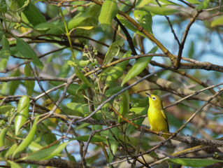 The Best Site to See Survived Population of Javan White-eye in Java.