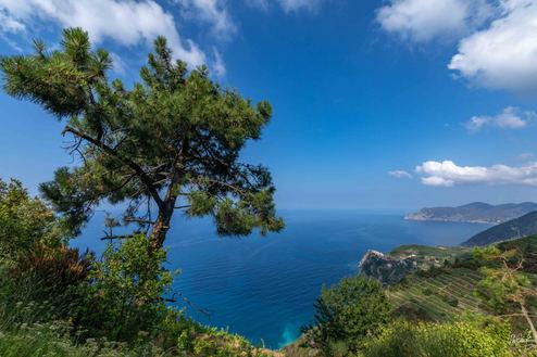 2019-07-13 - Cinque Terre (5Q1A0208).jpg