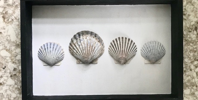 The Scallopsons (family of 4)