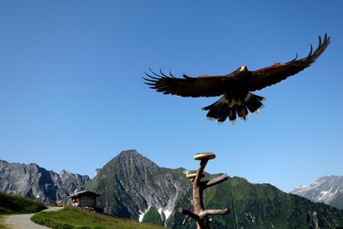 Mayrhofen - Ahorn