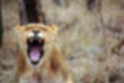 africa-anger-animal-55814.jpg