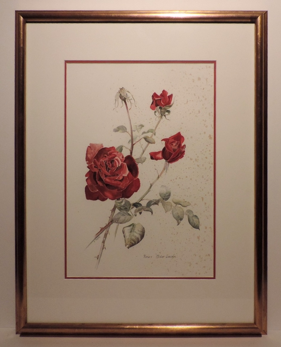 Framed Watercolour_Mister Lincoln Rose