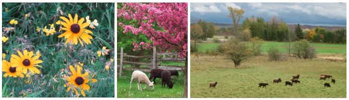 Images from Crow Hill farm