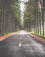 tree-forest-road-trail-sunlight-morning-