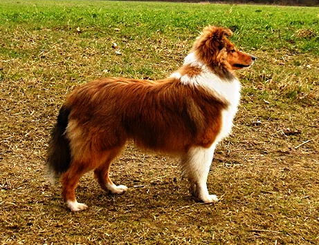 puppy kheelan bij criz_edited_edited