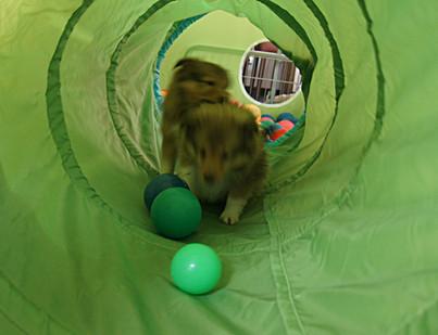 Nest H