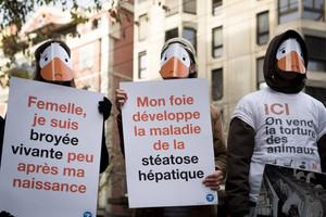 Samedi 24/11 : grande manifestation à Lausanne